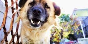 Diferencias entre perros hiperactivos y sobreactivos
