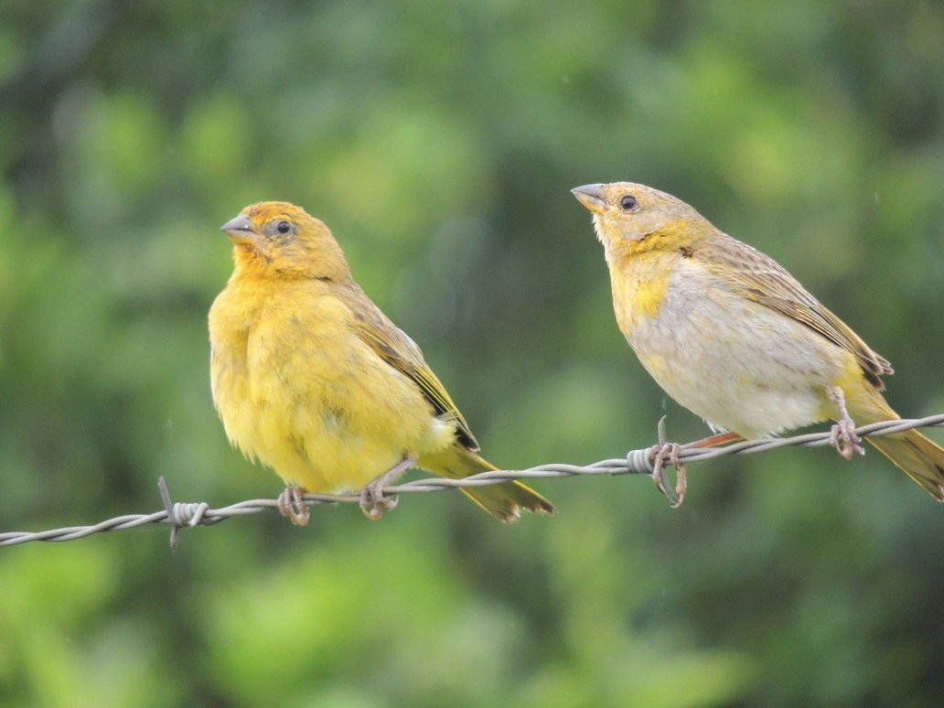 Mi pájaro es hembra o macho?