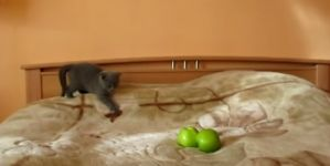 Gatos frente a trucos de magia