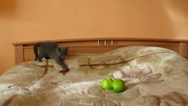 gatos-trucos-de-magia