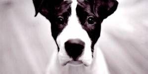 Terapia conductual para perros hiperactivos o sobreactivos