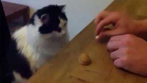 Gato adivino