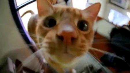 Gato hablando