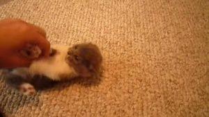El gatito más tierno