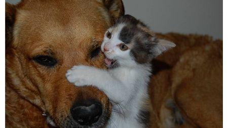¿Perros y gatos se llevan mal?
