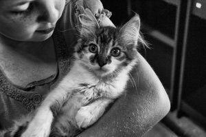 ¿Por qué ronronean los gatos? (Parte I)