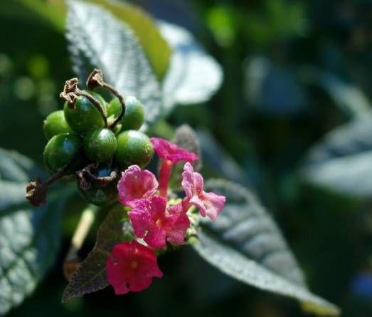 Un fitosanitario para cada enfermedad (Parte I)