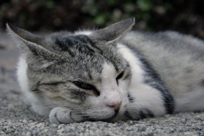 El buen tiempo y los gatos – Parte II