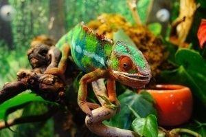 ¿Cómo cuidar un reptil en cautividad?