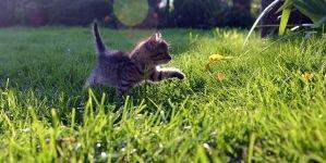 ¿Cómo tener gatos más felices?