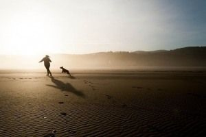 ¿Cómo transmitir serenidad y paciencia a tu perro activo? - Parte II