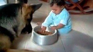 Perro cede comida a bebé