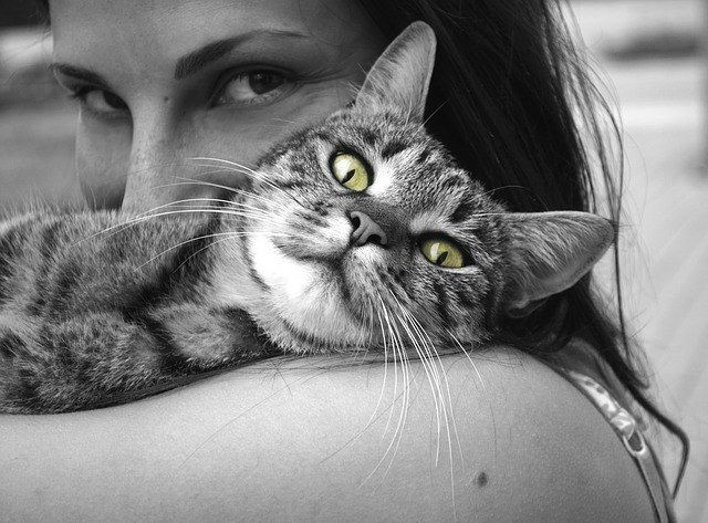¿Por qué se frota mi gato conmigo?