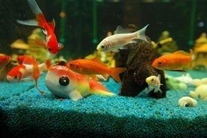 Sobrepoblación en acuario