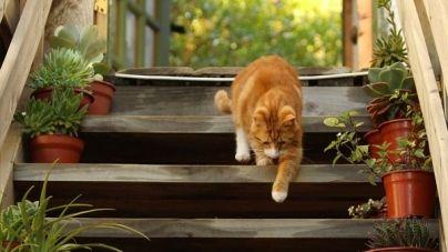 ¿Qué hacer si mi gato se pierde? – Parte I