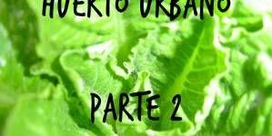 Huerto urbano 2.