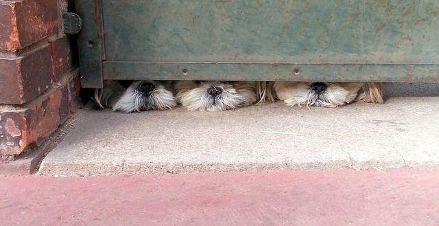 Mi perro ladra cuando me voy de casa, ¿cómo lo puedo evitar?
