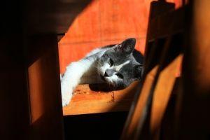 ¿Qué hacer si mi gato se pierde? – Parte II