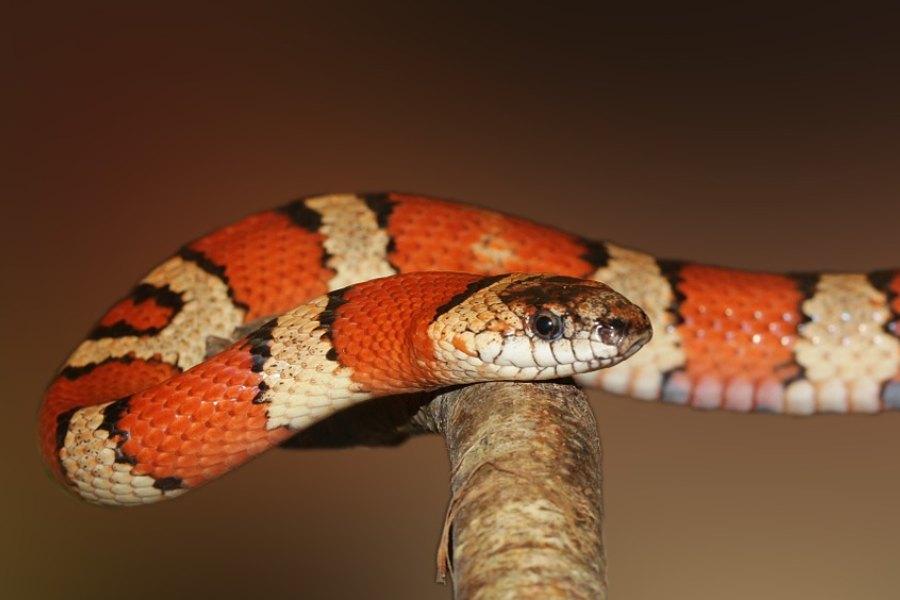 Mi serpiente no come, ¿Qué hago_