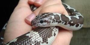 ¿Cómo escoger mi primer reptil?