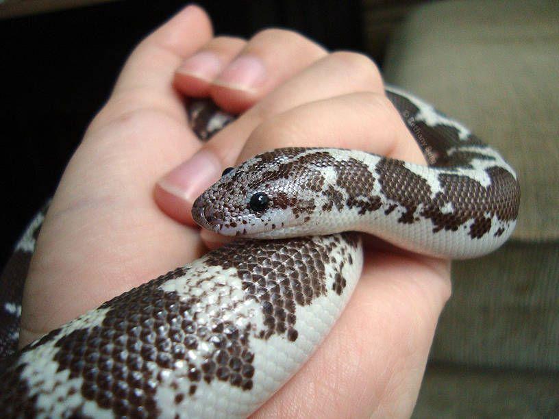 Anatomía de las serpientes - Tiendanimal