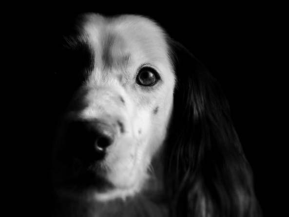 Comunicación bidireccional: Escucha a tu perro – Parte I