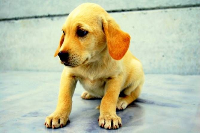 Comunicación bidireccional: escucha a tu perro – Parte II