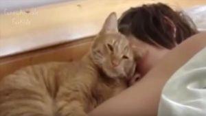 Gato despertador