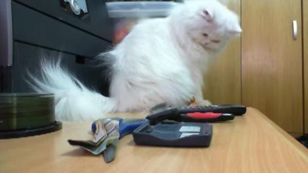 Gato tira todo lo que tiene a su alrededor