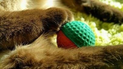 Gatos y deporte