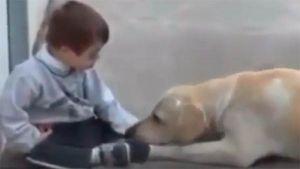 Inmenso amor animal por un niño