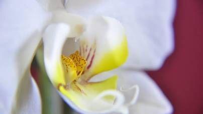 Orquídeas (1ª Parte)