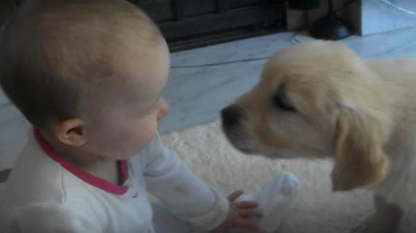 Perrito y bebé se conocen