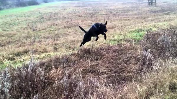 Hank, el perro que adora dar saltos
