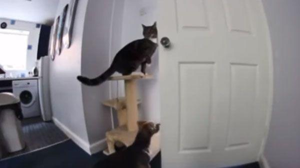 Gato y perro se ponen de acuerdo para escapar