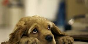 ¿Cómo actuar con un perro miedoso? – Parte I