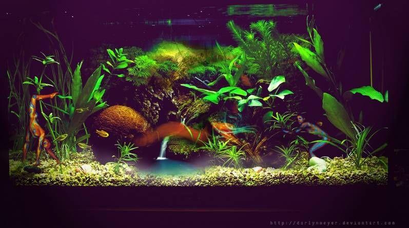 ¿Por qué mi acuario está turbio?