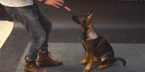 Cómo reaccionan los perros al ver una salchicha volar