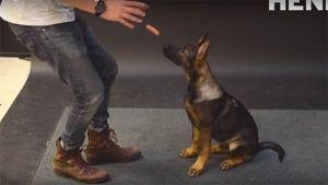 Cómo reaccionan los perro al ver una salchicha volar