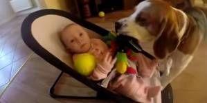 Perro se siente culpable de robar los juguetes a bebé