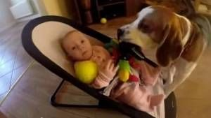 Perro juguete bebé