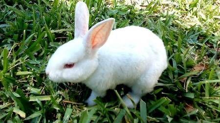 Conejo en el spa