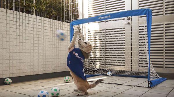 Jugadores de fútbol algo animales