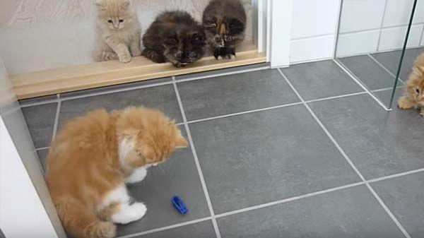 Juegos de Gatitos