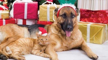 Las mascotas y las fiestas