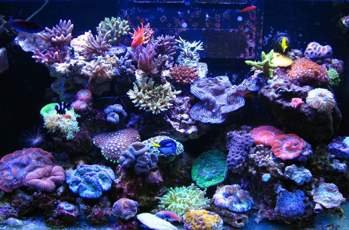 Es malo que mis peces est n siempre en la superficie for Peces marinos para acuarios pequenos