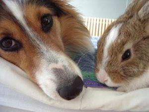 gato-y-conejo-juego