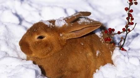 Conejo juega en la nieve