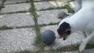 Tortuga y perrito juegan juntos a la pelota
