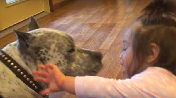 Pitbull da besos a niña